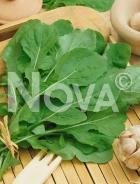 Rucola coltivata N1701912