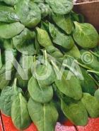 Spinacio baby leaf U00679