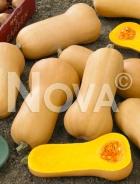 Zucca butternut liscia G4702104