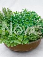 Aromatiche mix N1703683
