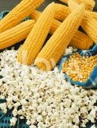 Mais da popcorn N1702256