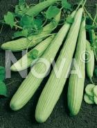 Tortarello liscio verde chiaro 702227