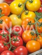 Pomodori in miscuglio N1704833