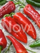 Peperone corno di toro rosso N1707193