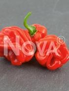 Peperone aji dulce long N1705648