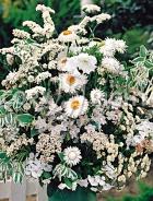 Miscuglio di fiori bianchi F-267