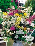 Miscuglio di fiori annuali F-271