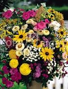 Miscuglio di fiori annuali F-272