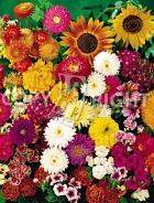 Miscuglio di fiori annuali F-273