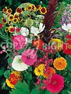 Miscuglio di fiori annuali F-274