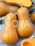 Zucca butternut liscia N1701233