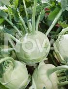 Cavolo rapa bianco delikates N1706166