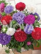 Astro bouquet mix N1516129