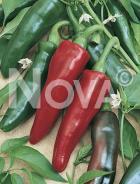 Peperone füszer N1701137