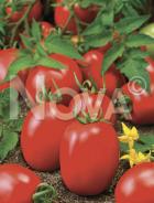Pomodoro 120-122-06 N1703255