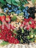 Piccoli frutti 179805