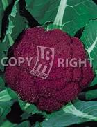 Cavolfiore violetto di sicilia 10-297