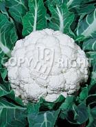 Cavolfiore napoletano marzatico 10-319
