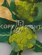 Cavolfiore verde di macerata A-2474