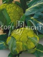 Cavolfiore verde di macerata A-2475