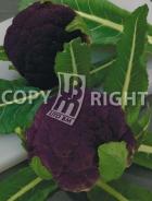 Cavolfiore violetto di sicilia A-2479