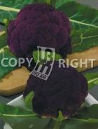 Cavolfiore violetto di sicilia A-2480