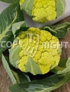 Cavolfiore verde di macerata A-2725