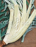 Cardo bianco avorio a foglia frastagliata 8-197