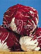 Cicoria palla rossa 6 12-490