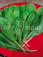 Cicoria bionda da taglio a foglie larghe 12-442
