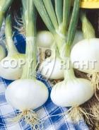 Cipolla blanca pompei A-1207