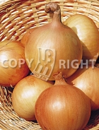 Cipolla babosa temprana 14-563