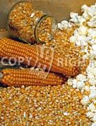 Mais da popcorn A-1065