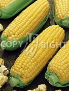 Mais da popcorn A-193