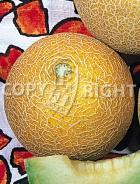 Melone arancino A-354
