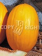 Melone amarillo oro A-615