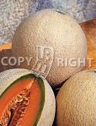 Melone arancino A-625