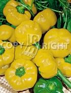 Peperone giallo botinecka 23-888