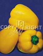 Peperone cuneo giallo 23-894
