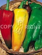 Miscuglio di peperoni corno 23-927