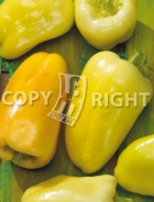 Peperone albaregia A-1398