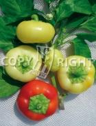 Peperone giallo botinecka A-1995