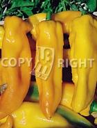Peperone corno di toro giallo A-360