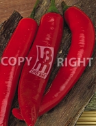 Peperone corno di toro rosso A-880