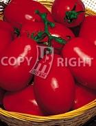 Pomodoro chico III 24-986