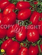 Pomodoro chico III A-697