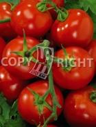 Pomodoro campbell 33 A-2325