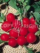 Ravanello biglia rossa 29-1057