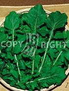 Rucola coltivata 31-1091