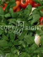 Valeriana coquille de louviers A-2412